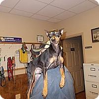 Adopt A Pet :: Damon - Heber Springs, AR
