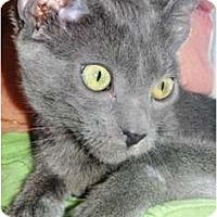 Adopt A Pet :: Halina - Pasadena, CA