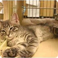 Adopt A Pet :: Cody II - Jenkintown, PA