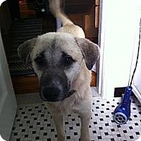 Adopt A Pet :: Milo - Alexandria, VA