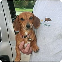 Adopt A Pet :: Tiger - Garden Grove, CA