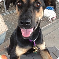 Adopt A Pet :: Gypsy - Medora, IN
