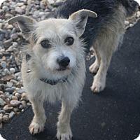 Adopt A Pet :: Boris - Woonsocket, RI