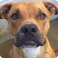 Adopt A Pet :: Benzema - Springdale, AR