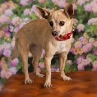 Adopt A Pet :: Destiny - Mesa, AZ