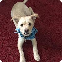 Adopt A Pet :: CARTER - AFFECTIONATE! - Los Angeles, CA
