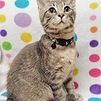 Domestic Shorthair Cat for adoption in Cannelton, Indiana - Jack