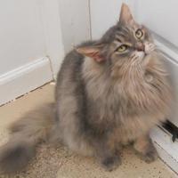 Adopt A Pet :: Skyler - Belleville, MI