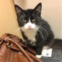 Adopt A Pet :: Mathias - McDonough, GA