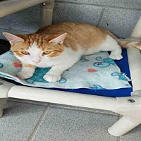 Adopt A Pet :: INSPECTOR - Canfield, OH