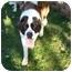 Photo 3 - St. Bernard Dog for adoption in Flint, Michigan - Maiya