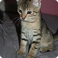 Adopt A Pet :: Morgan - Santa Rosa, CA