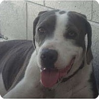 Adopt A Pet :: Tad & Lad - Winter Haven, FL