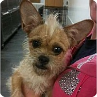 Adopt A Pet :: Jasmine - Arlington, TX