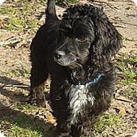 Adopt A Pet :: Wags - Sugarland, TX