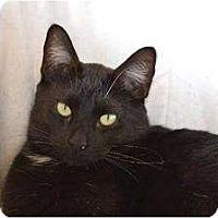 Adopt A Pet :: Phantom - Metairie, LA