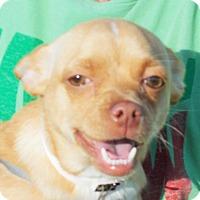 Adopt A Pet :: Luna - Plain City, OH
