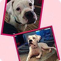 Adopt A Pet :: Roxy - Scottsdale, AZ