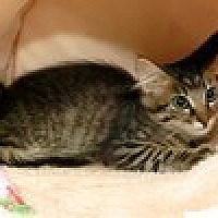 Adopt A Pet :: Louise - Arlington, TX
