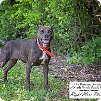 Adopt A Pet :: Ritzy - North Myrtle Beach, SC