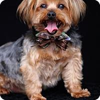 Adopt A Pet :: Yoshi - SAN PEDRO, CA