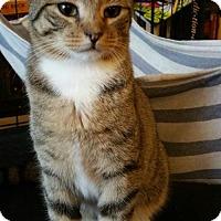 Adopt A Pet :: Sprite - Flushing, NY
