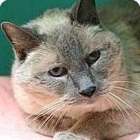 Adopt A Pet :: Cotton - Davis, CA