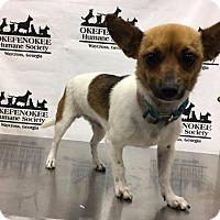 Adopt A Pet :: Alexa - Waycross, GA