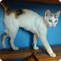 Adopt A Pet :: Whitney - Brookings, SD