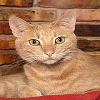 Adopt A Pet :: OLIVER - Alameda, CA