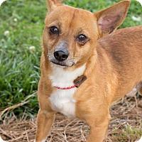 Adopt A Pet :: Bo Bud Beach - Alpharetta, GA