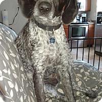 Adopt A Pet :: Dixie - Essex, MD