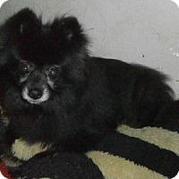 Adopt A Pet :: Matilda - HELP! - Lansing, MI