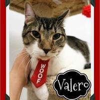 Adopt A Pet :: Valero - Fort Worth, TX