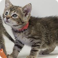 Adopt A Pet :: Diaphora - Washburn, WI