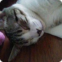Adopt A Pet :: Crowned Princess - Tampa, FL