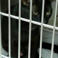 Adopt A Pet :: Ebony - Myrtle Beach, SC