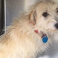 Adopt A Pet :: Pecan - Cumberland, MD