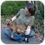 Photo 3 - Terrier (Unknown Type, Medium)/Hound (Unknown Type) Mix Puppy for adoption in White Plains, New York - Sasha