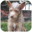 Photo 1 - Terrier (Unknown Type, Small) Mix Dog for adoption in Kingwood, Texas - Marty