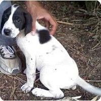 Adopt A Pet :: Mercedes - Plainfield, CT