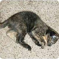 Adopt A Pet :: PoppySeed - Modesto, CA