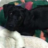 Adopt A Pet :: Andie - Ooltewah, TN