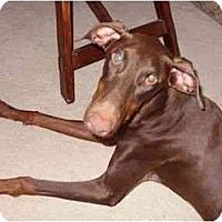 Adopt A Pet :: Emma--adopted!! - New Richmond, OH