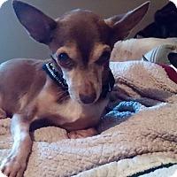 Adopt A Pet :: Nutmeg - Brooksville, FL