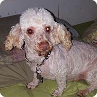 Adopt A Pet :: Grover - DAYTON, OH