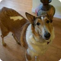 Adopt A Pet :: Katy - Stafford, TX