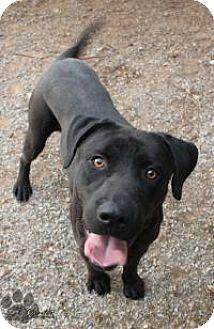 Labrador Retriever Mix Dog for adoption in Yukon, Oklahoma - Jax