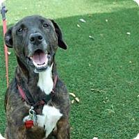 Adopt A Pet :: Riley - Bradenton, FL