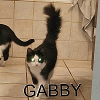 Adopt A Pet :: GABY - Davison, MI